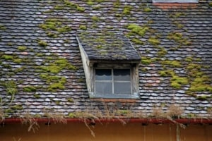 Roof with moss and clogged gutters leads to water damage