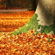 Fall - Worst Season for Allergies and Asthma