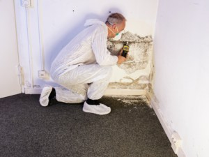 How to choose the best mold removal company