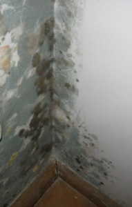 mold can be many colors not just black, pets and mold
