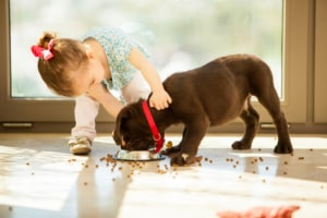 child feeding dog
