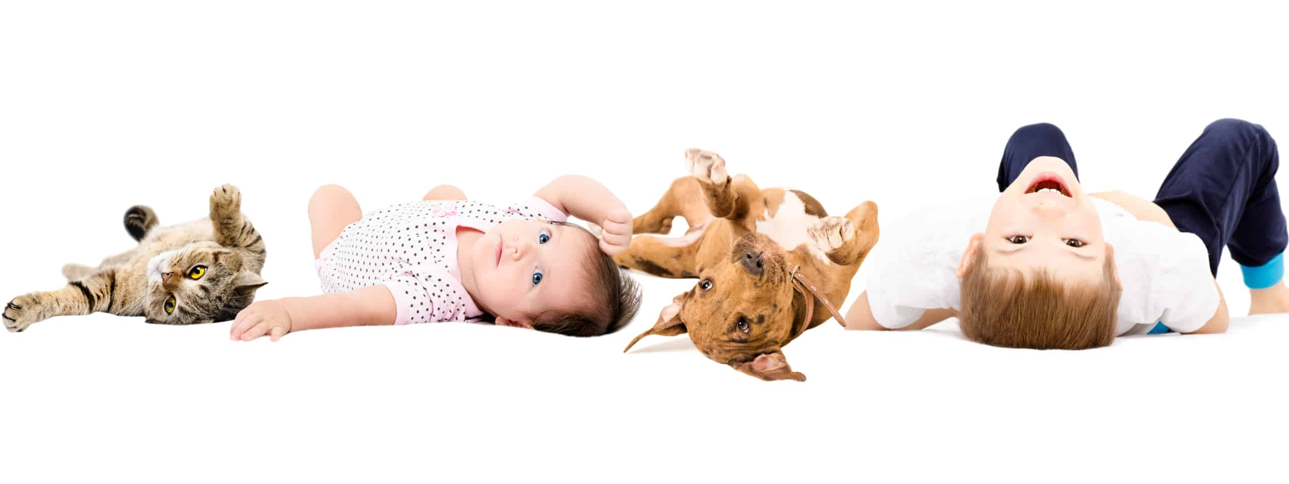 kids, cat, and dog - black mold and pets